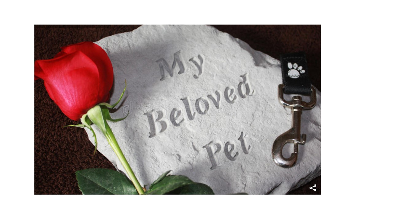Loss of a pet and how grief manifests  Various coping